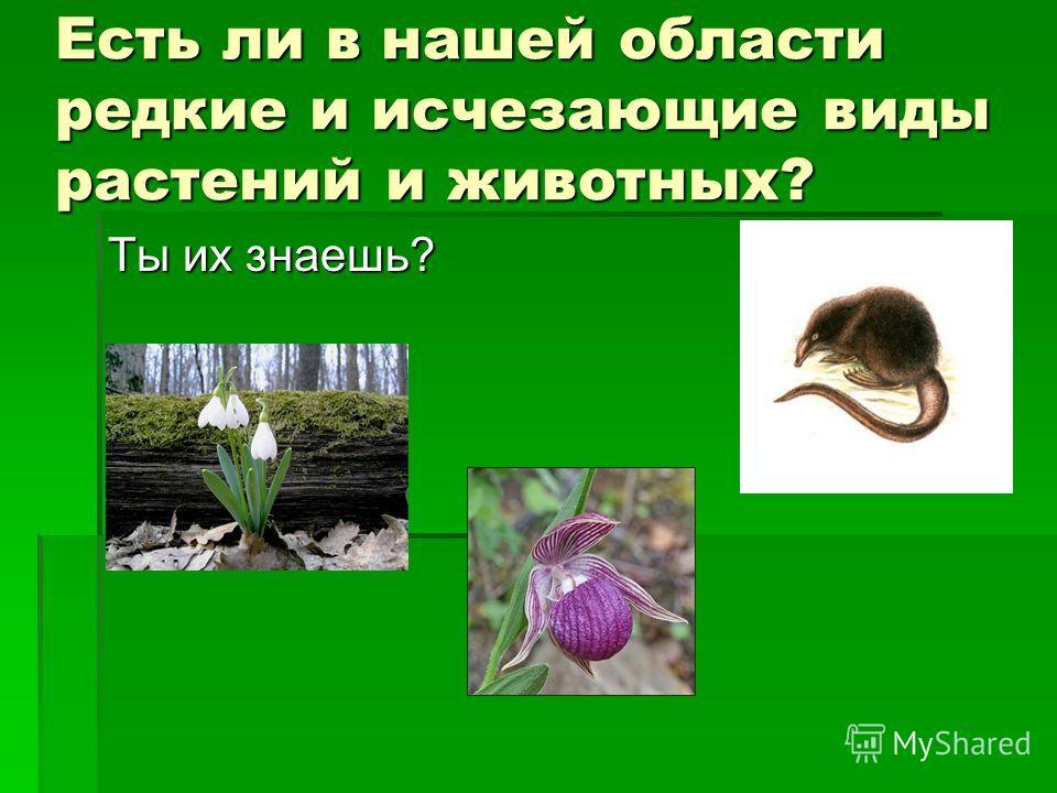 Есть ли в нашей области редкие и исчезающие виды растений и животных? Ты их знаешь?