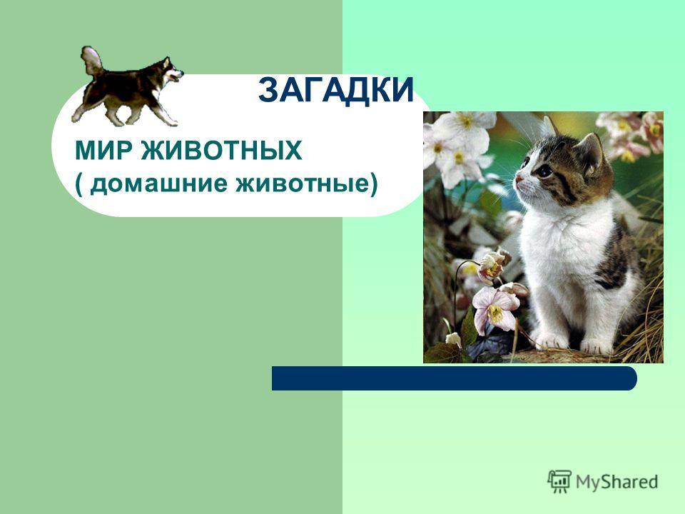 ЗАГАДКИ МИР ЖИВОТНЫХ ( домашние животные)