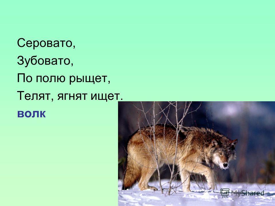 Серовато, Зубовато, По полю рыщет, Телят, ягнят ищет. волк