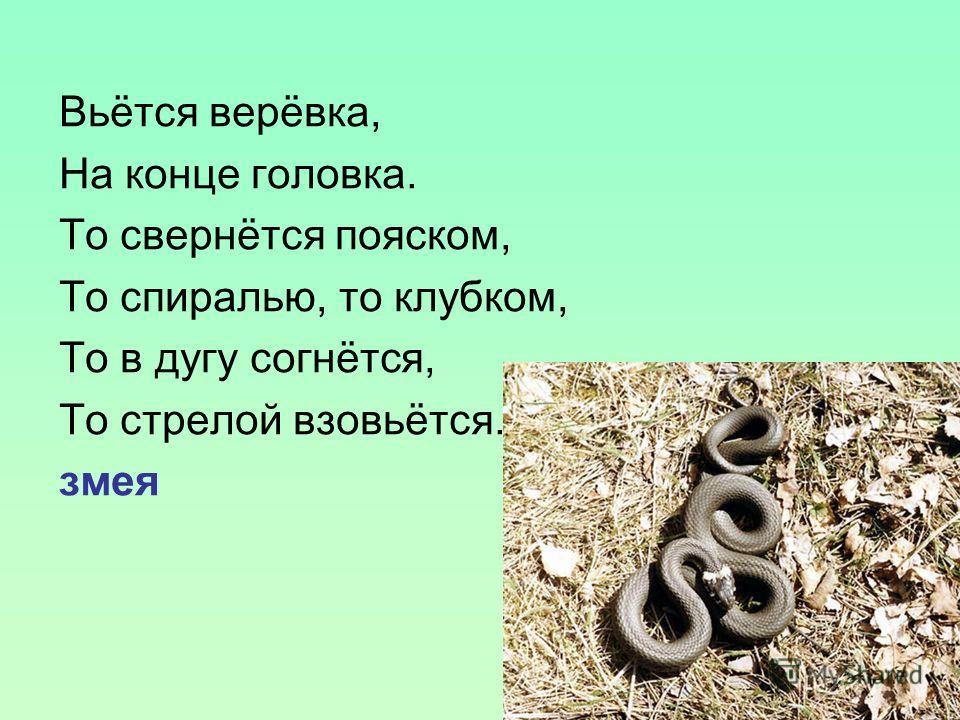 Вьётся верёвка, На конце головка. То свернётся пояском, То спиралью, то клубком, То в дугу согнётся, То стрелой взовьётся. змея