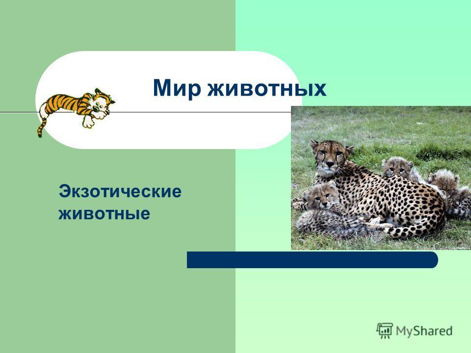 Мир животных Экзотические животные