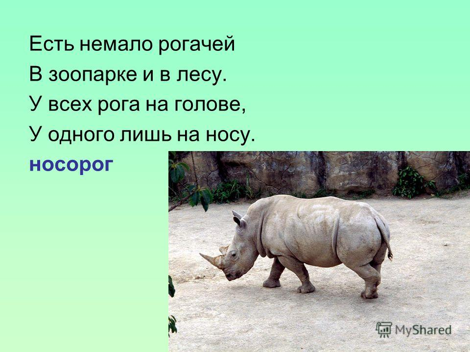 Есть немало рогачей В зоопарке и в лесу. У всех рога на голове, У одного лишь на носу. носорог