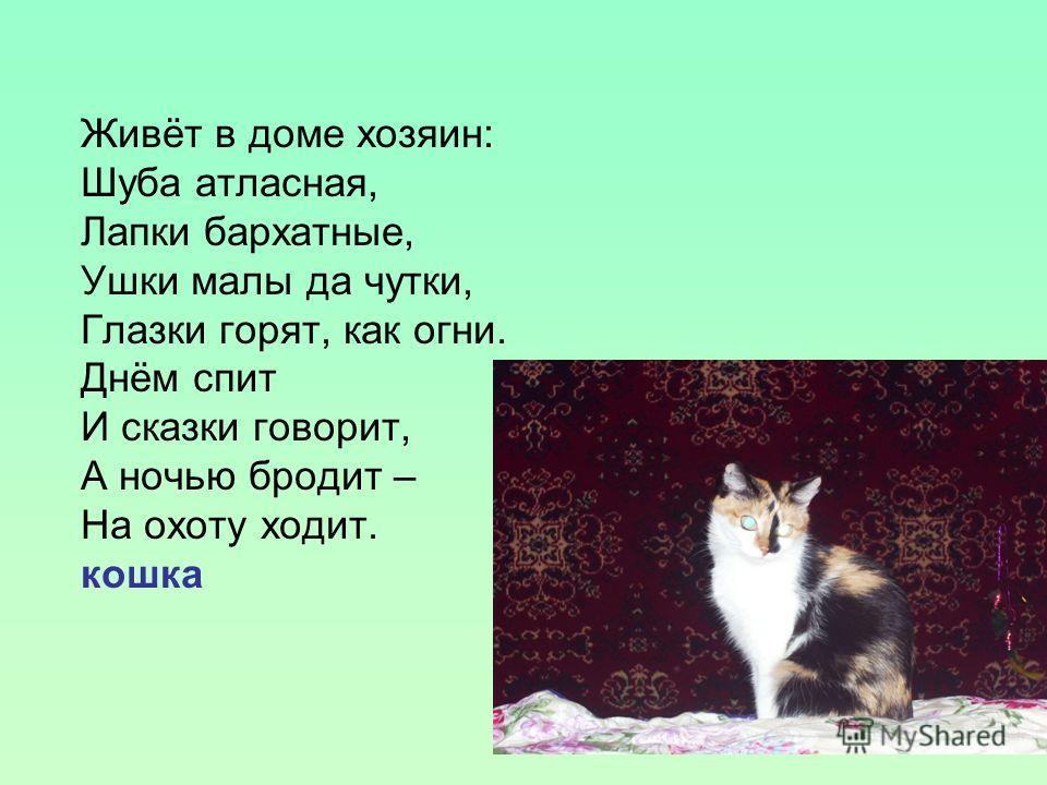 Живёт в доме хозяин: Шуба атласная, Лапки бархатные, Ушки малы да чутки, Глазки горят, как огни. Днём спит И сказки говорит, А ночью бродит – На охоту ходит. кошка