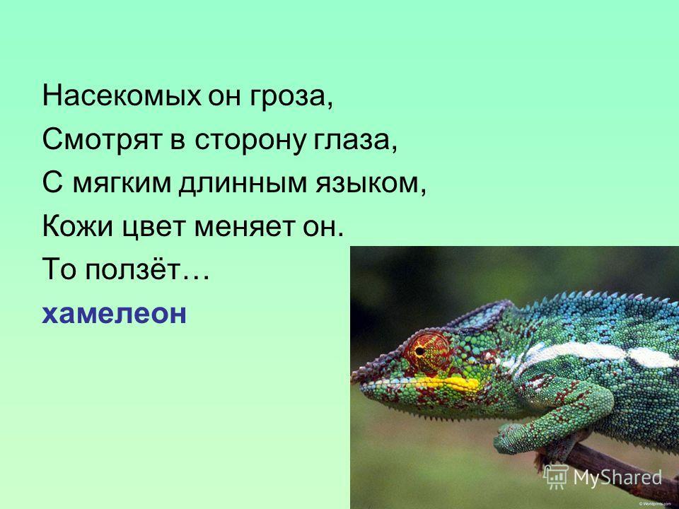 Насекомых он гроза, Смотрят в сторону глаза, С мягким длинным языком, Кожи цвет меняет он. То ползёт… хамелеон