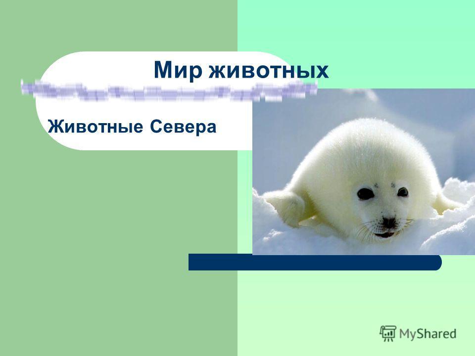Мир животных Животные Севера