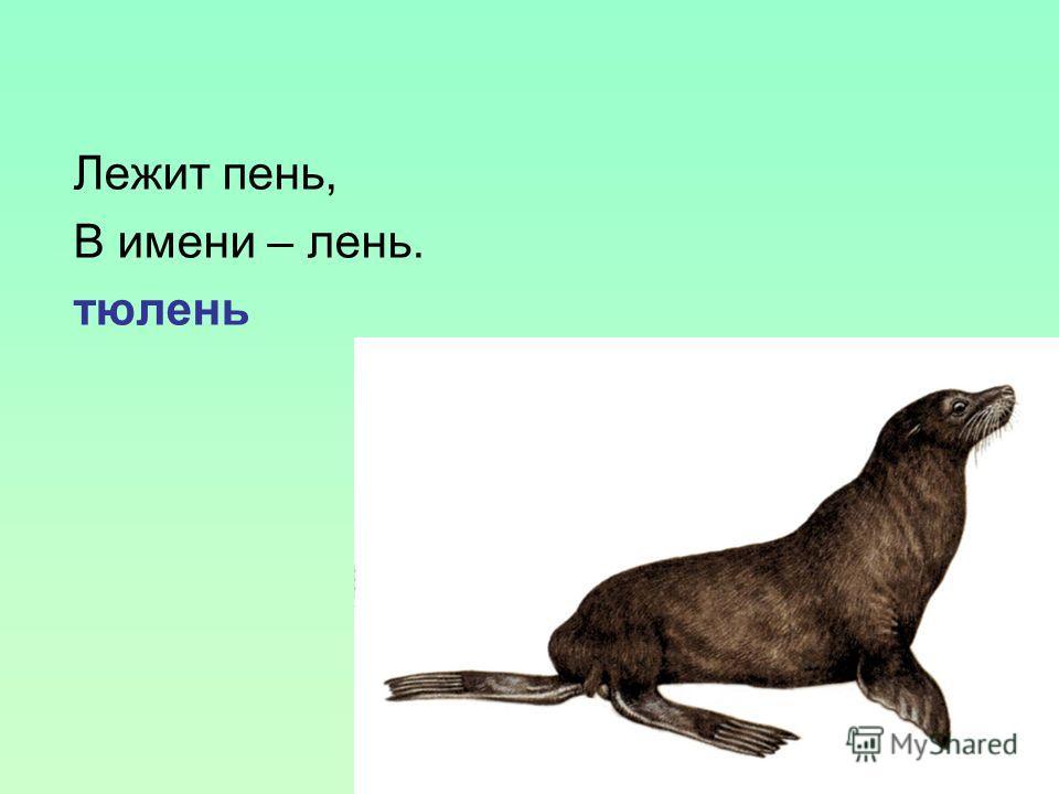 Лежит пень, В имени – лень. тюлень