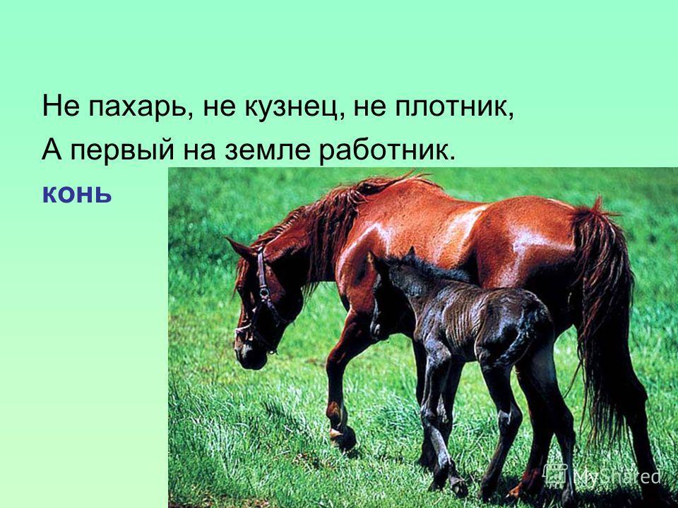 Не пахарь, не кузнец, не плотник, А первый на земле работник. конь