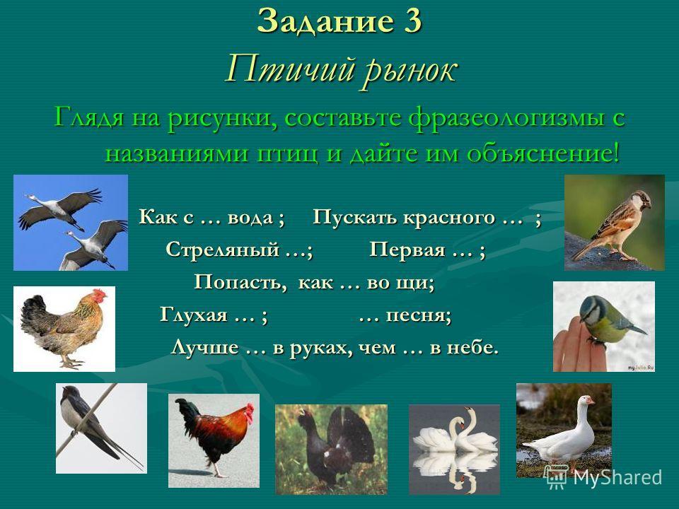 Задание 3 Птичий рынок Глядя на рисунки, составьте фразеологизмы с названиями птиц и дайте им объяснение! Как с … вода ; Пускать красного … ; Стреляный …; Первая … ; Стреляный …; Первая … ; Попасть, как … во щи; Попасть, как … во щи; Глухая … ; … пес