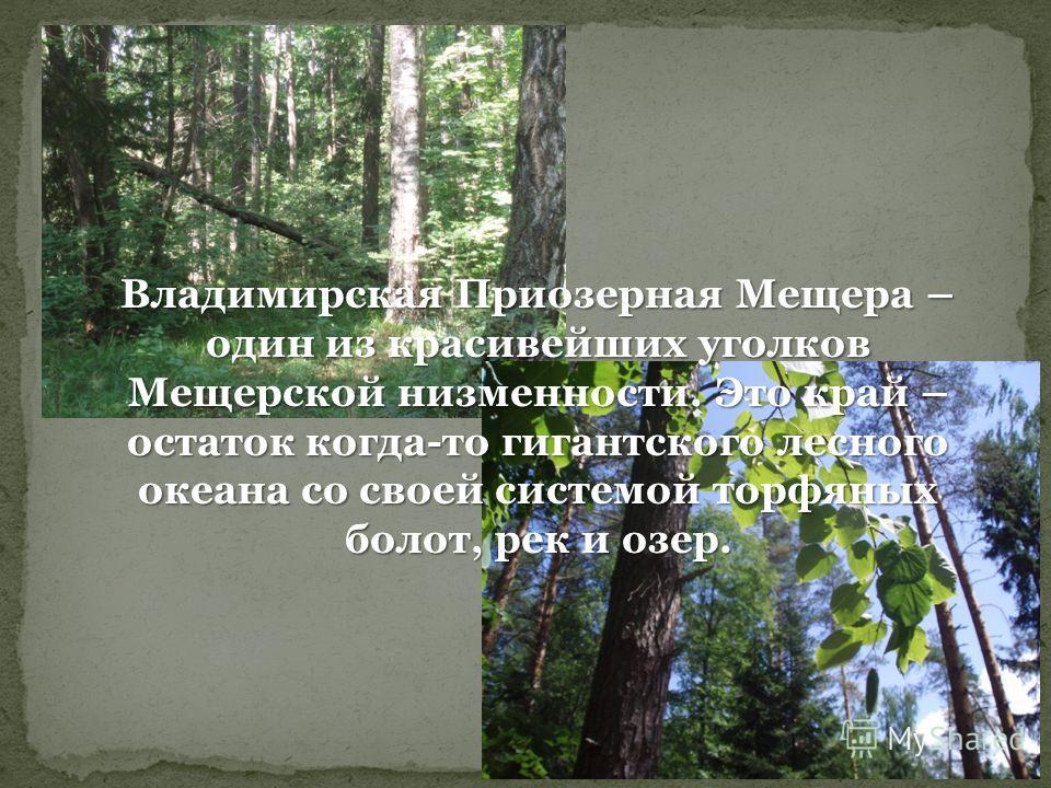 Владимирская Приозерная Мещера – один из красивейших уголков Мещерской низменности. Это край – остаток когда-то гигантского лесного океана со своей системой торфяных болот, рек и озер.