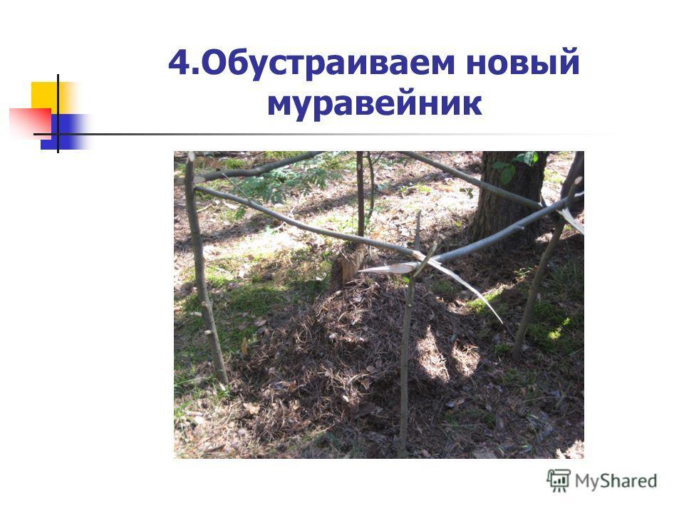 4.Обустраиваем новый муравейник