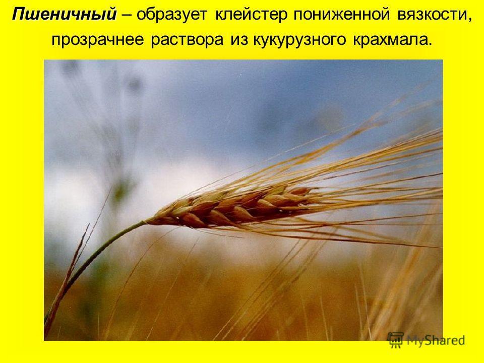 Пшеничный Пшеничный – образует клейстер пониженной вязкости, прозрачнее раствора из кукурузного крахмала.