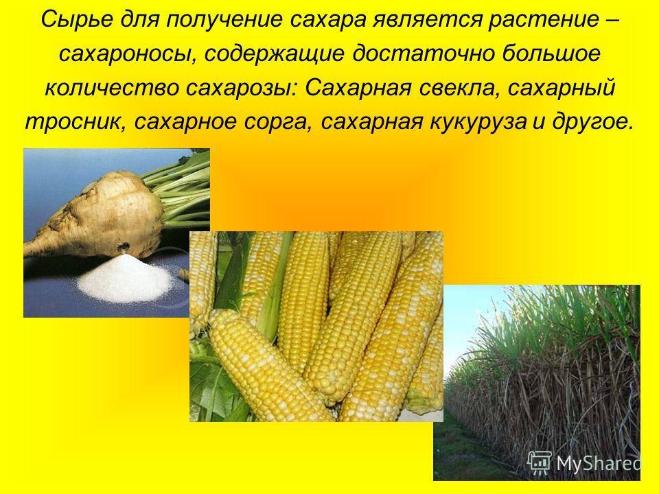 Сырье для получение сахара является растение – сахароносы, содержащие достаточно большое количество сахарозы: Сахарная свекла, сахарный тросник, сахар