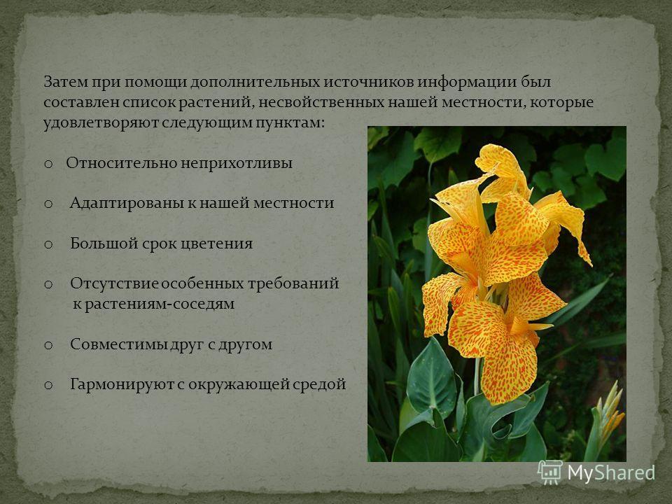 Затем при помощи дополнительных источников информации был составлен список растений, несвойственных нашей местности, которые удовлетворяют следующим пунктам: o Относительно неприхотливы o Адаптированы к нашей местности o Большой срок цветения o Отсут