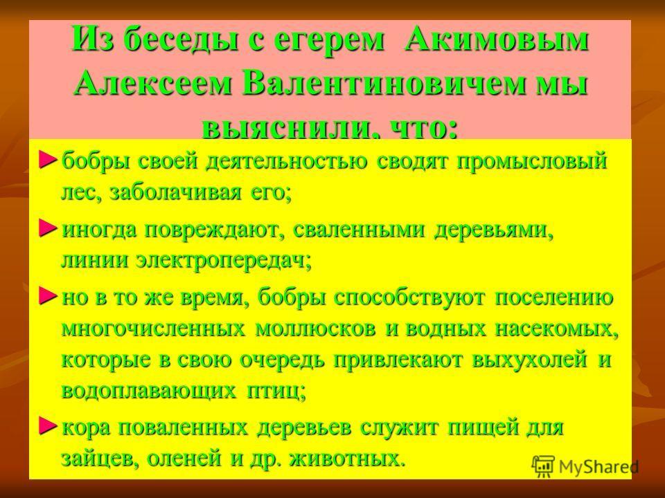 Из беседы с егерем Акимовым Алексеем Валентиновичем мы выяснили, что: бобры своей деятельностью сводят промысловый лес, заболачивая его;бобры своей деятельностью сводят промысловый лес, заболачивая его; иногда повреждают, сваленными деревьями, линии