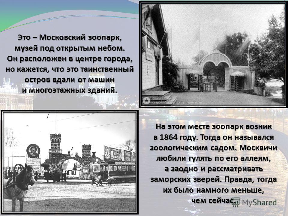 Это – Московский зоопарк, музей под открытым небом. Он расположен в центре города, но кажется, что это таинственный остров вдали от машин и многоэтажных зданий. На этом месте зоопарк возник в 1864 году. Тогда он назывался зоологическим садом. Москвич