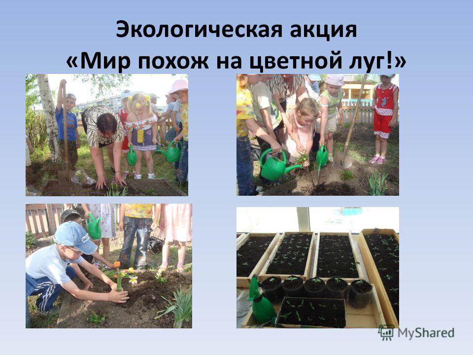 Экологическая акция «Мир похож на цветной луг!»