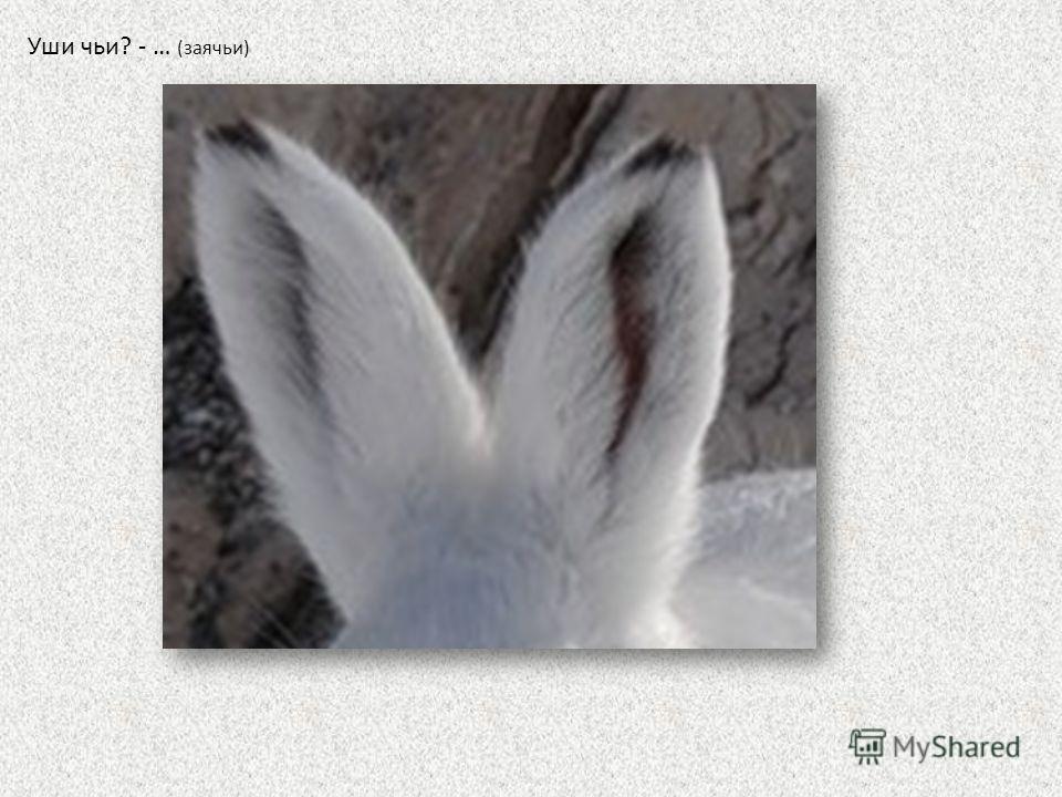 Уши чьи? - … (заячьи)