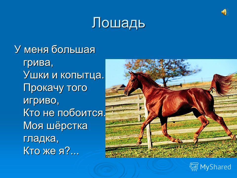 Лошадь У меня большая грива, Ушки и копытца. Прокачу того игриво, Кто не побоится. Моя шёрстка гладка, Кто же я?...