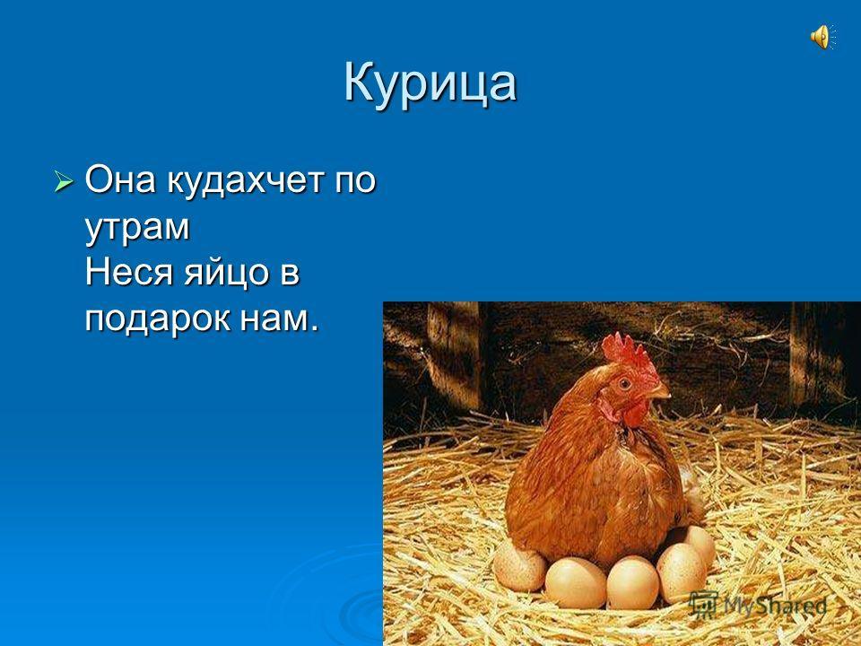 Курица Она кудахчет по утрам Неся яйцо в подарок нам. Она кудахчет по утрам Неся яйцо в подарок нам.