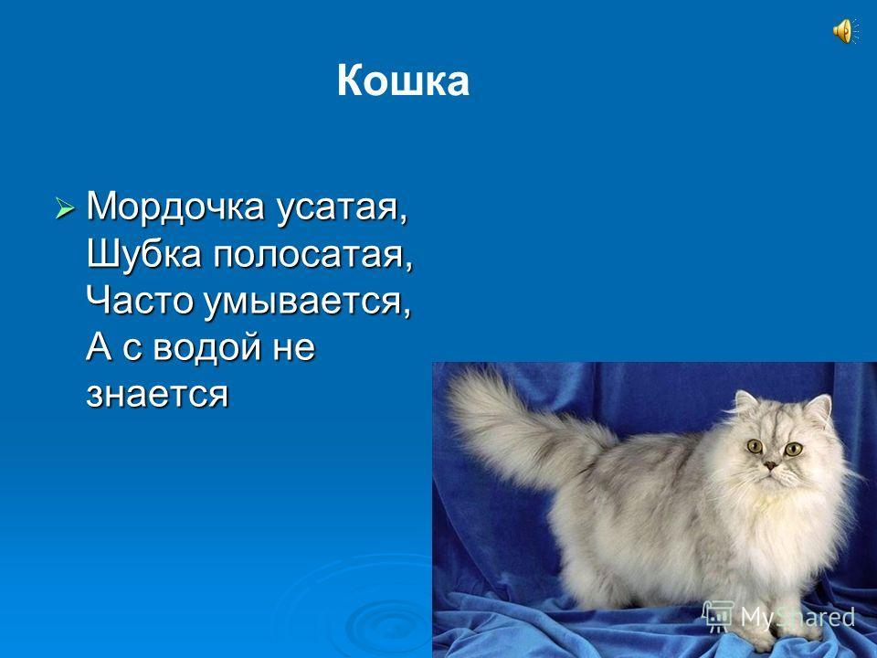 Мордочка усатая, Шубка полосатая, Часто умывается, А с водой не знается Мордочка усатая, Шубка полосатая, Часто умывается, А с водой не знается Кошка