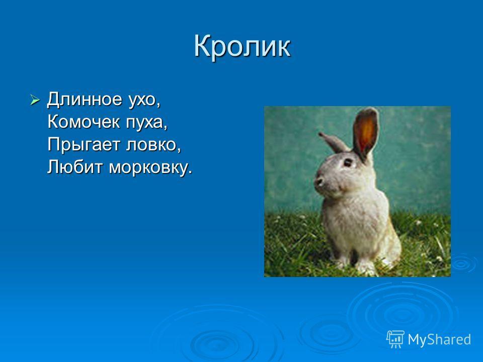 Кролик Длинное ухо, Комочек пуха, Прыгает ловко, Любит морковку. Длинное ухо, Комочек пуха, Прыгает ловко, Любит морковку.
