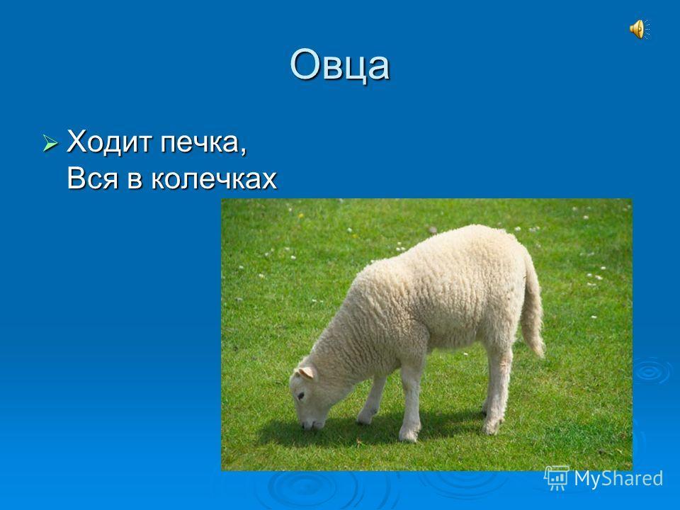Овца Ходит печка, Вся в колечках Ходит печка, Вся в колечках