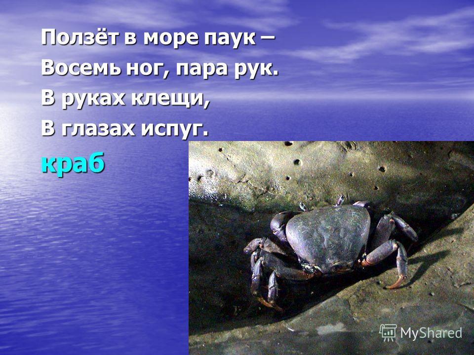 Ползёт в море паук – Восемь ног, пара рук. В руках клещи, В глазах испуг. краб