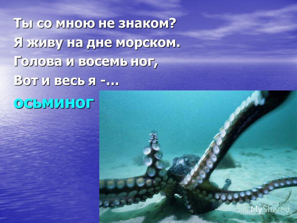 Ты со мною не знаком? Я живу на дне морском. Голова и восемь ног, Вот и весь я -… осьминог