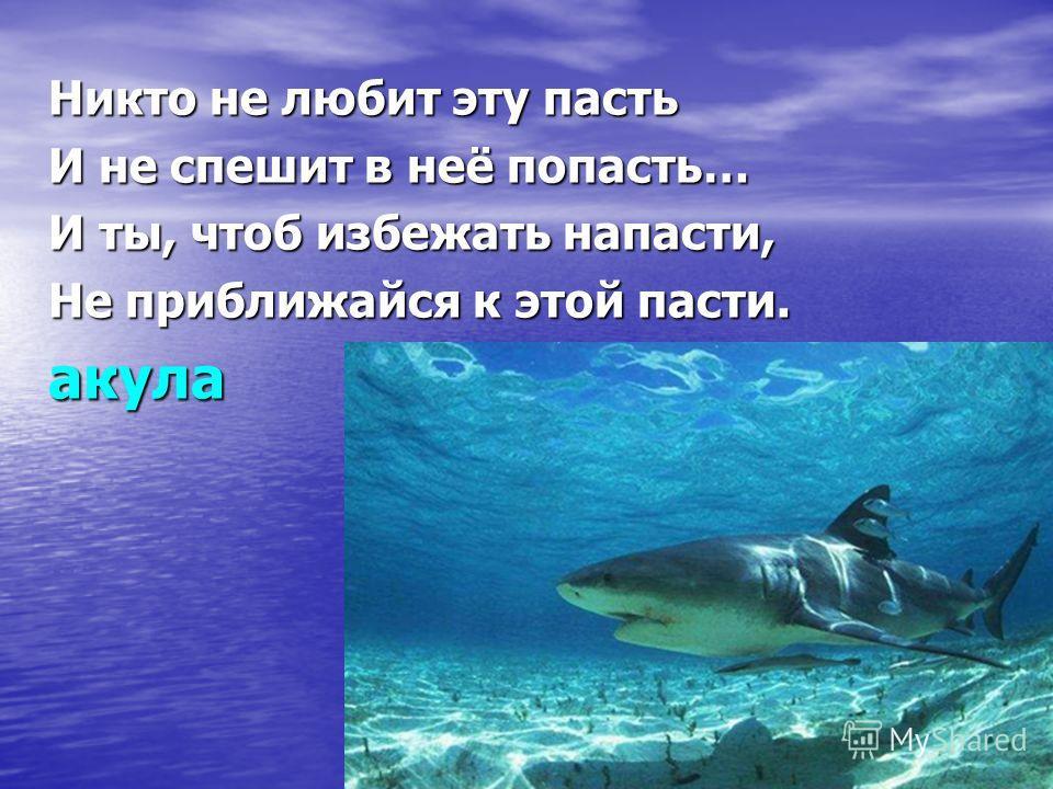 Никто не любит эту пасть И не спешит в неё попасть… И ты, чтоб избежать напасти, Не приближайся к этой пасти. акула