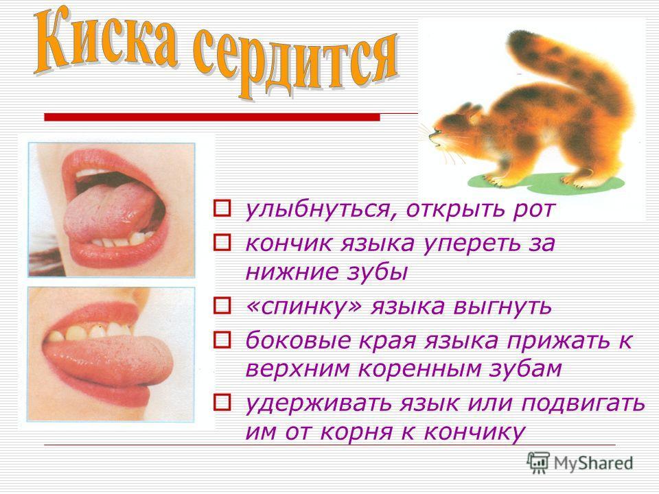улыбнуться, открыть рот кончик языка упереть за нижние зубы «спинку» языка выгнуть боковые края языка прижать к верхним коренным зубам удерживать язык или подвигать им от корня к кончику