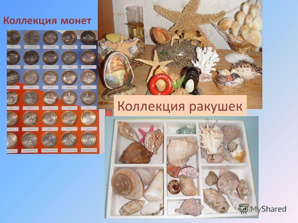 Коллекция монет Коллекция ракушек