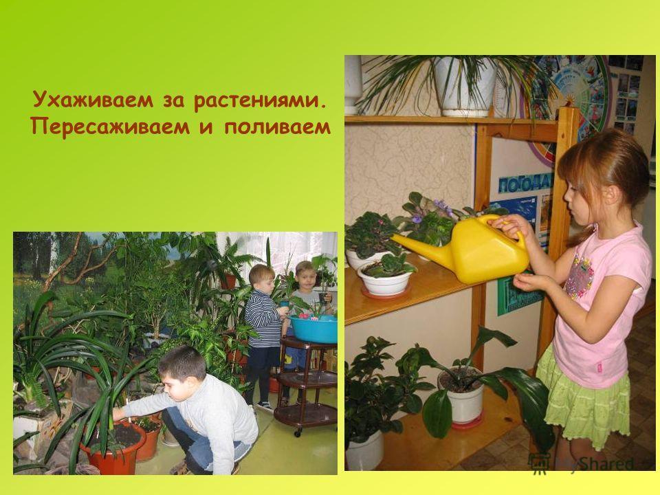Ухаживаем за растениями. Пересаживаем и поливаем