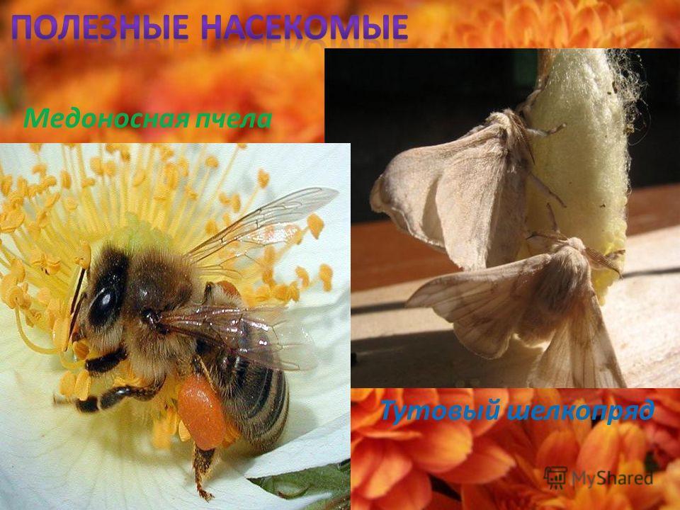Майский жук Бабочка - капустница Колорадский жук Блоха