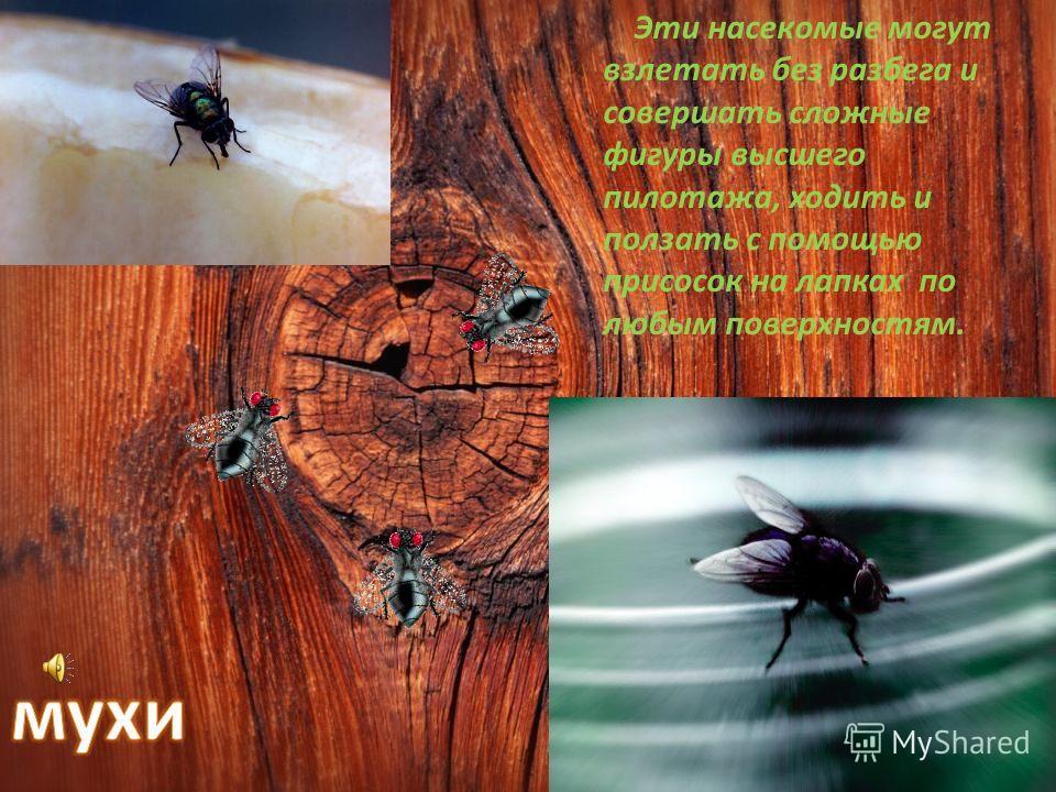 У кузнечиков длинные ноги, прямые надкрылья, у самок сзади «мечи» или «сабли» с помощью которых они откладывают яички в землю, в стебли растений. Они «поют» при помощи крыльев и у всех «уши» на передних ногах. Все кузнечики хорошо прыгают, отталкивая