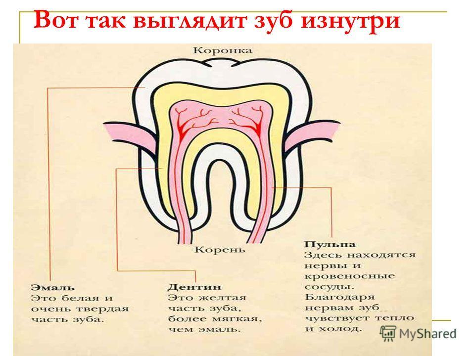 Вот так выглядит зуб изнутри