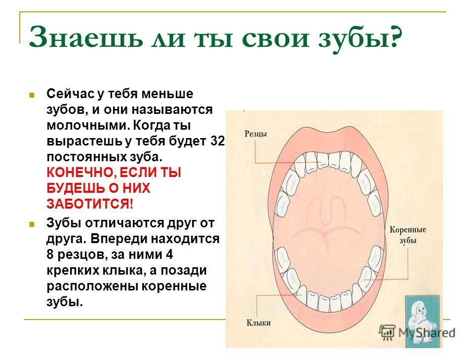 Знаешь ли ты свои зубы? Сейчас у тебя меньше зубов, и они называются молочными. Когда ты вырастешь у тебя будет 32 постоянных зуба. КОНЕЧНО, ЕСЛИ ТЫ БУДЕШЬ О НИХ ЗАБОТИТСЯ! Зубы отличаются друг от друга. Впереди находится 8 резцов, за ними 4 крепких