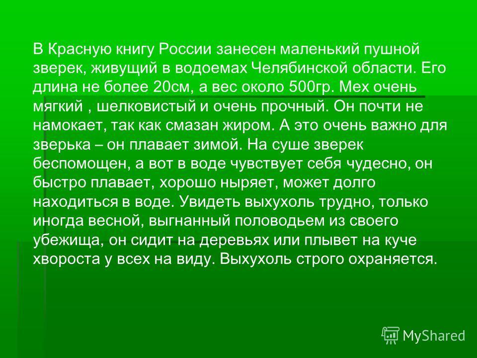 В Красную книгу России занесен маленький пушной зверек, живущий в водоемах Челябинской области. Его длина не более 20см, а вес около 500гр. Мех очень мягкий, шелковистый и очень прочный. Он почти не намокает, так как смазан жиром. А это очень важно д