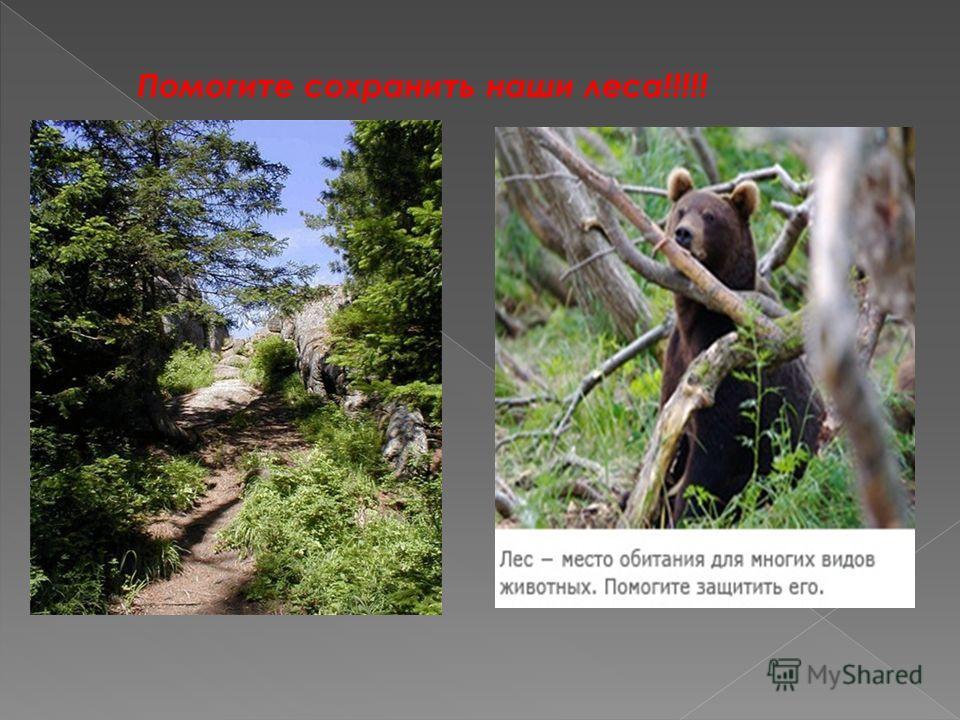 Помогите сохранить наши леса!!!!!