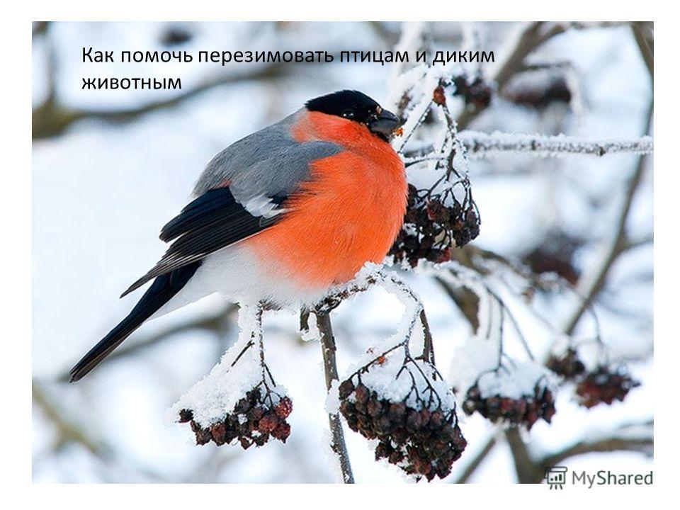 Как помочь перезимовать птицам и диким животным