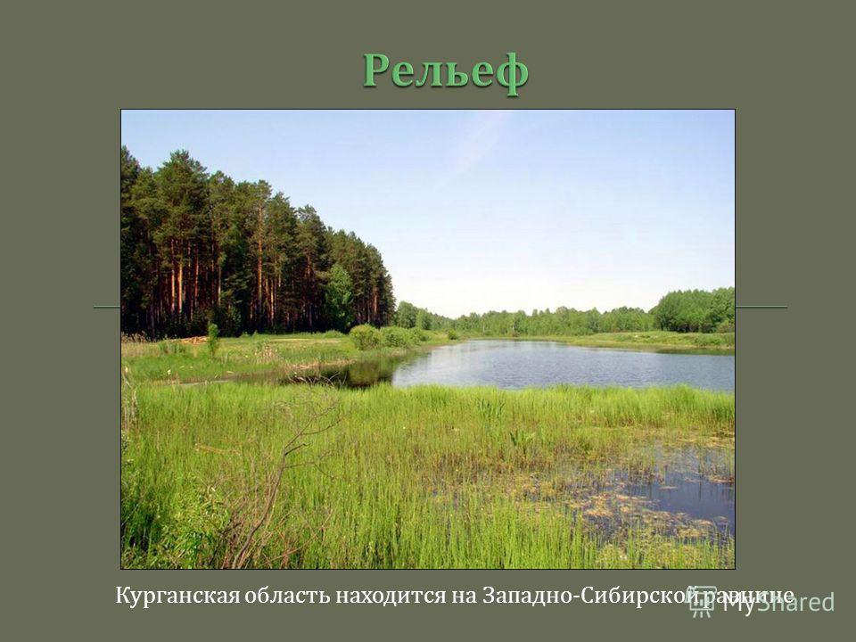 Курганская область находится на Западно - Сибирской равнине