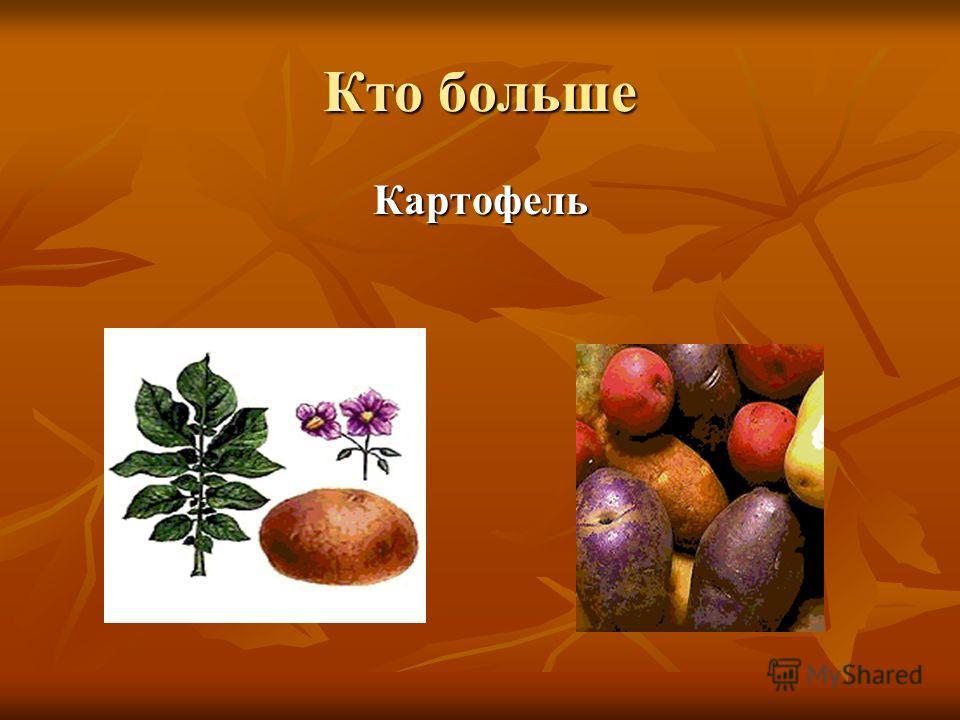 Кто больше Картофель
