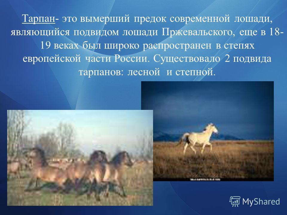 Тарпан- это вымерший предок современной лошади, являющийся подвидом лошади Пржевальского, еще в 18- 19 веках был широко распространен в степях европейской части России. Существовало 2 подвида тарпанов: лесной и степной.