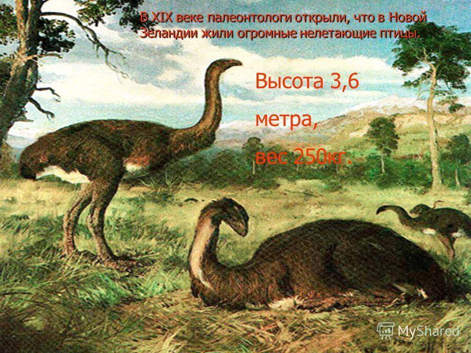 В XIX веке палеонтологи открыли, что в Новой Зеландии жили огромные нелетающие птицы. Высота 3,6 метра, вес 250кг.