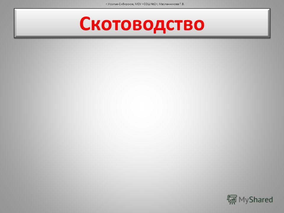 Скотоводство г.Усолье-Сибирское, МОУ «СОШ 2», Масленникова Г.В.