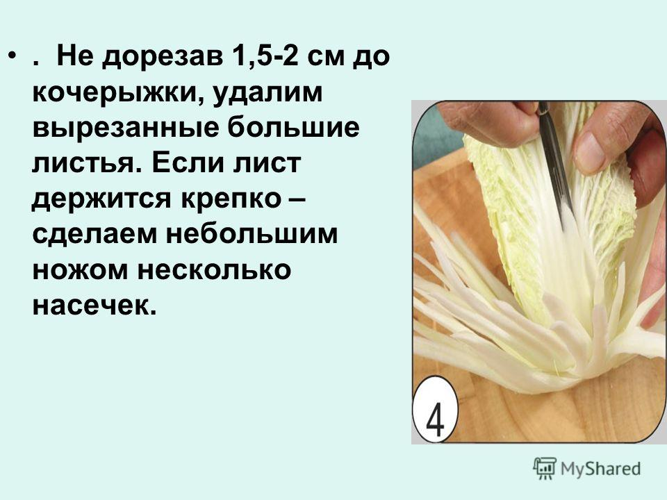 . Не дорезав 1,5-2 см до кочерыжки, удалим вырезанные большие листья. Если лист держится крепко – сделаем небольшим ножом несколько насечек.