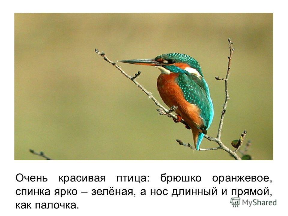 Очень красивая птица: брюшко оранжевое, спинка ярко – зелёная, а нос длинный и прямой, как палочка.
