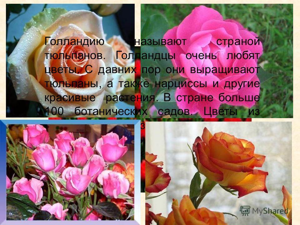 Голландию называют страной тюльпанов. Голландцы очень любят цветы. С давних пор они выращивают тюльпаны, а также нарциссы и другие красивые растения. В стране больше 100 ботанических садов. Цветы из Голландии вывозят для продажи в различные страны.
