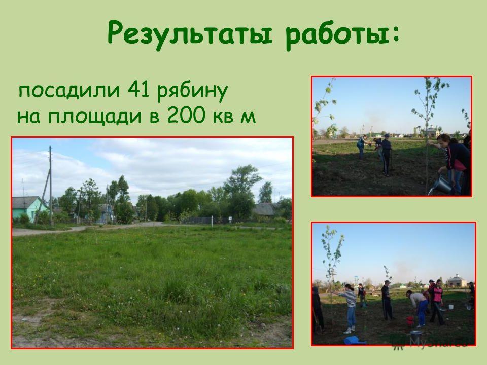Результаты работы: посадили 41 рябину на площади в 200 кв м