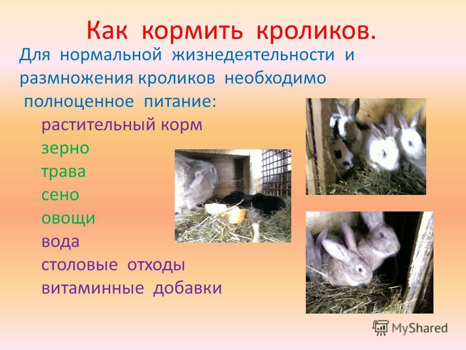 Как кормить кроликов. Для нормальной жизнедеятельности и размножения кроликов необходимо полноценное питание: растительный корм зерно трава сено овощи вода столовые отходы витаминные добавки