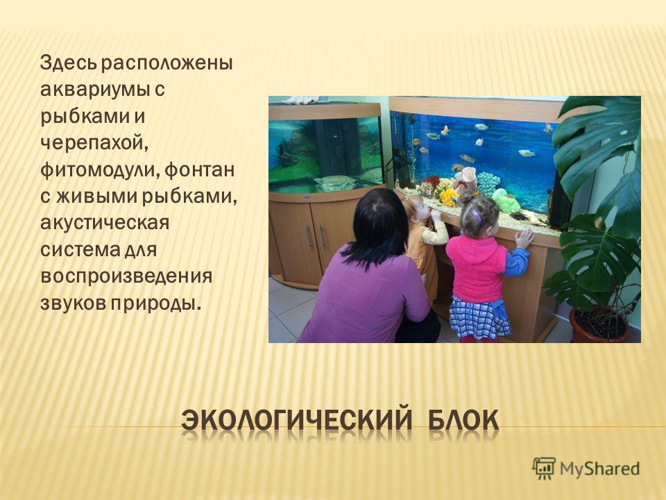Здесь расположены аквариумы с рыбками и черепахой, фитомодули, фонтан с живыми рыбками, акустическая система для воспроизведения звуков природы.